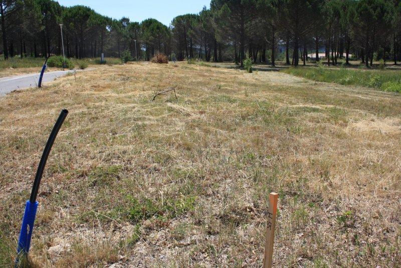 Terrains du constructeur EXPERTIMO • 1500 m² • BAGNOLS EN FORET