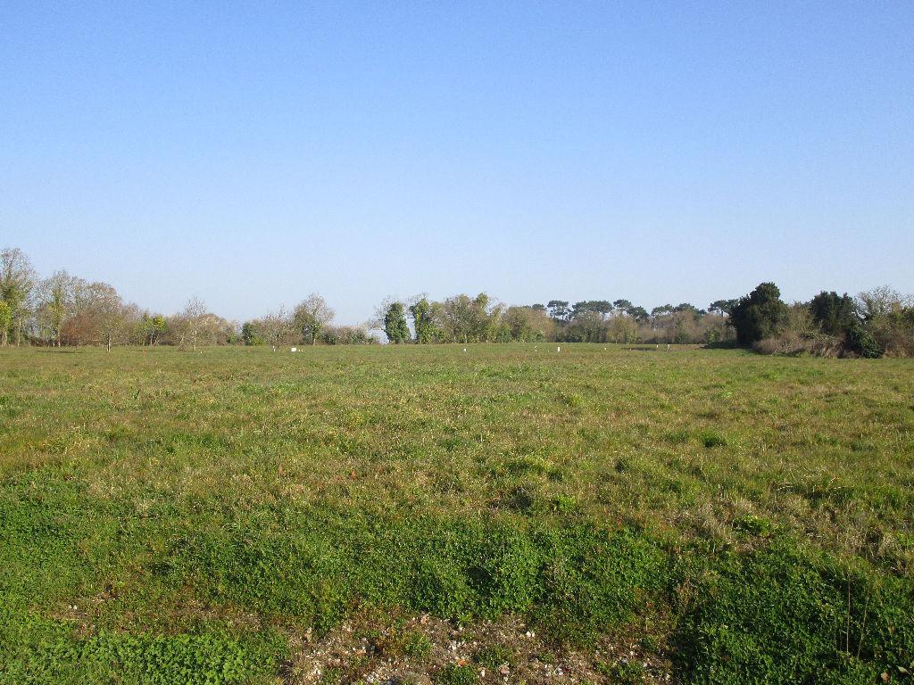 Terrains du constructeur L ADRESSE CHALLANS • 2067 m² • SALLERTAINE