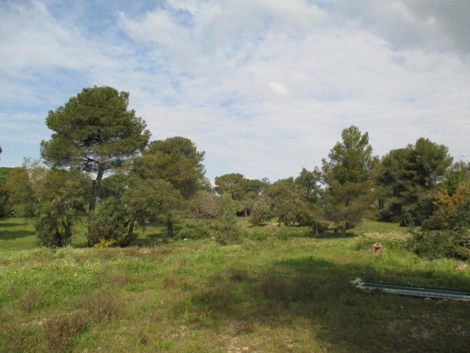 Terrains du constructeur LES MAISONS DE MANON • 1300 m² • COTIGNAC