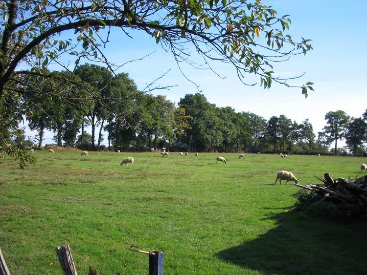 Terrains du constructeur NEGOCIM • 510 m² • SAINT CHRISTOPHE DES BOIS