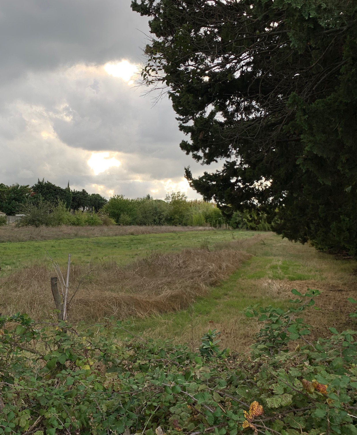 Terrains du constructeur MAS PROVENCE • 337 m² • NOVES