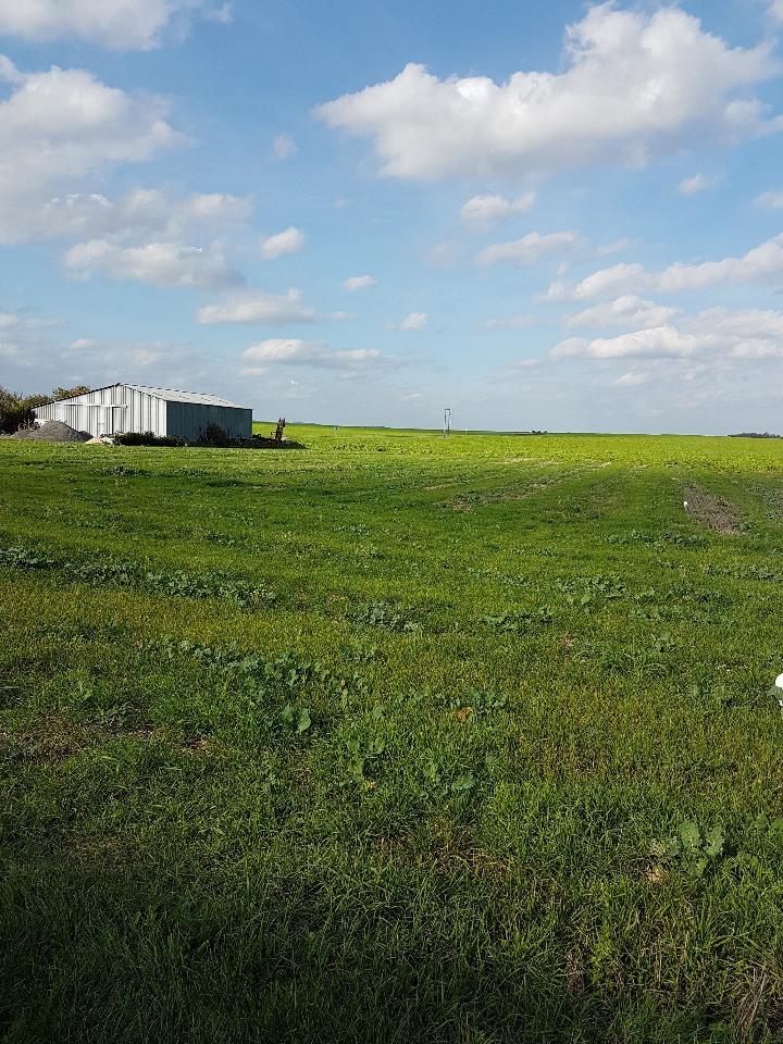 Terrains du constructeur MAISONS FRANCE CONFORT • 682 m² • SARRY