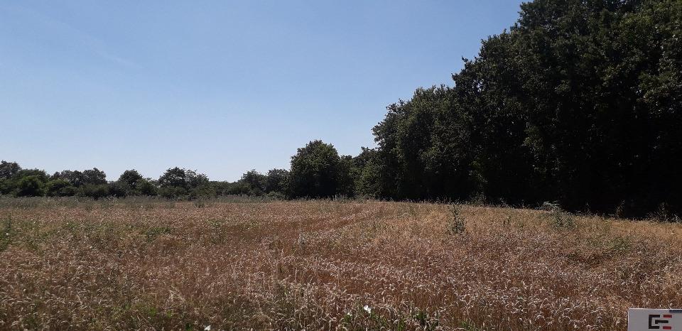 Terrains du constructeur LMP CONSTRUCTEUR • 439 m² • LA CHAPELLE HERMIER