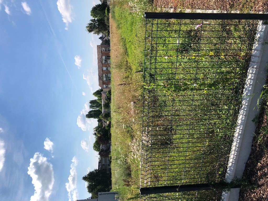 Terrains du constructeur BATIGE • 527 m² • SIERENTZ