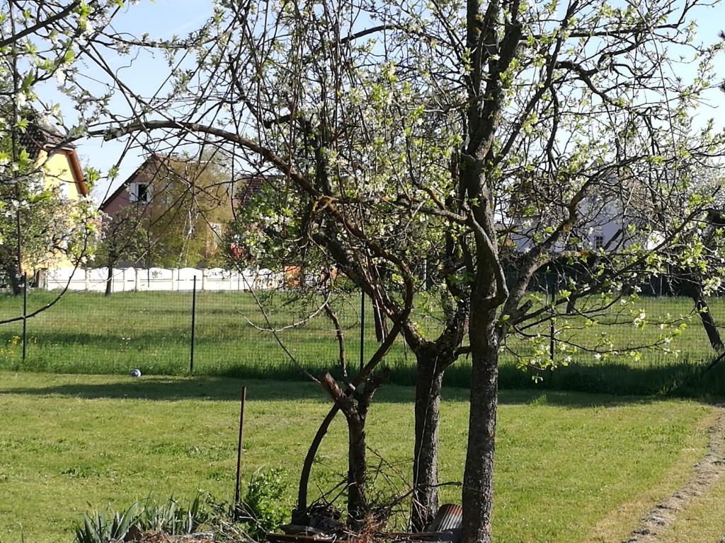 Terrains du constructeur BATIGE • 600 m² • BALDERSHEIM