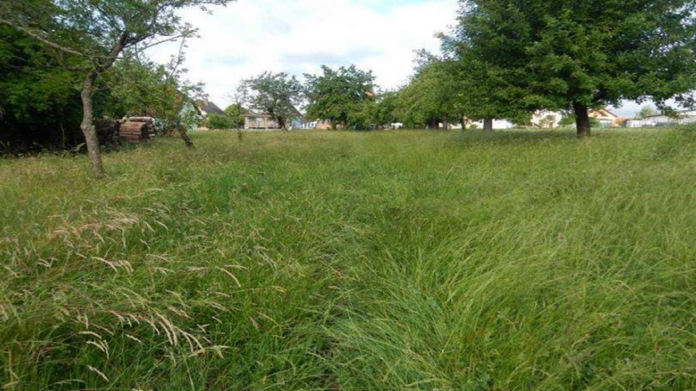 Terrains du constructeur Crédit Mutuel Aménagement foncier • 487 m² • STEINBOURG