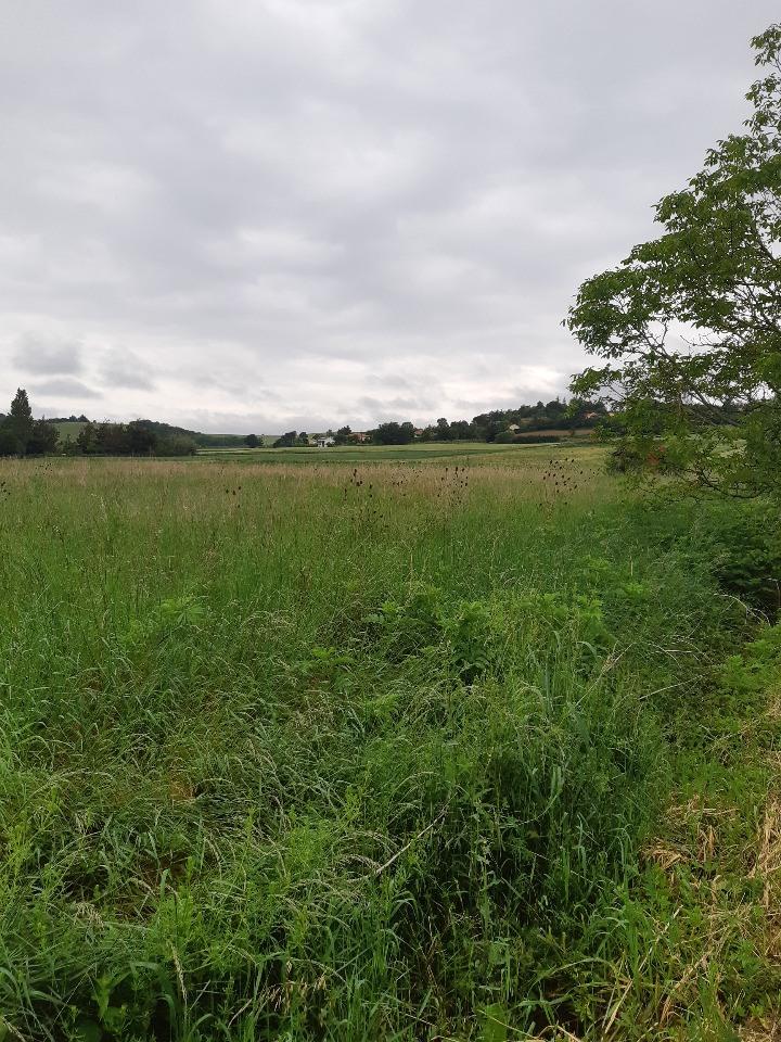 Terrains du constructeur MAISONS FRANCE CONFORT • 1000 m² • VILLEFRANCHE DE LAURAGAIS