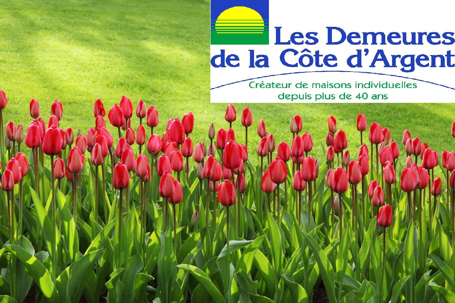 Terrains du constructeur LES DEMEURES DE LA COTE D'ARGENT • 475 m² • PARENTIS EN BORN