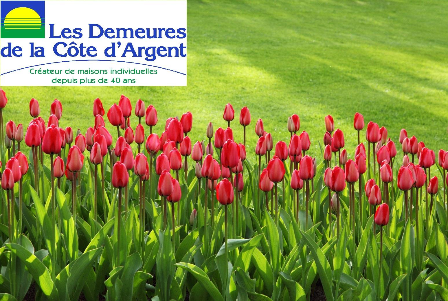 Terrains du constructeur LES DEMEURES DE LA COTE D'ARGENT • 538 m² • PARENTIS EN BORN