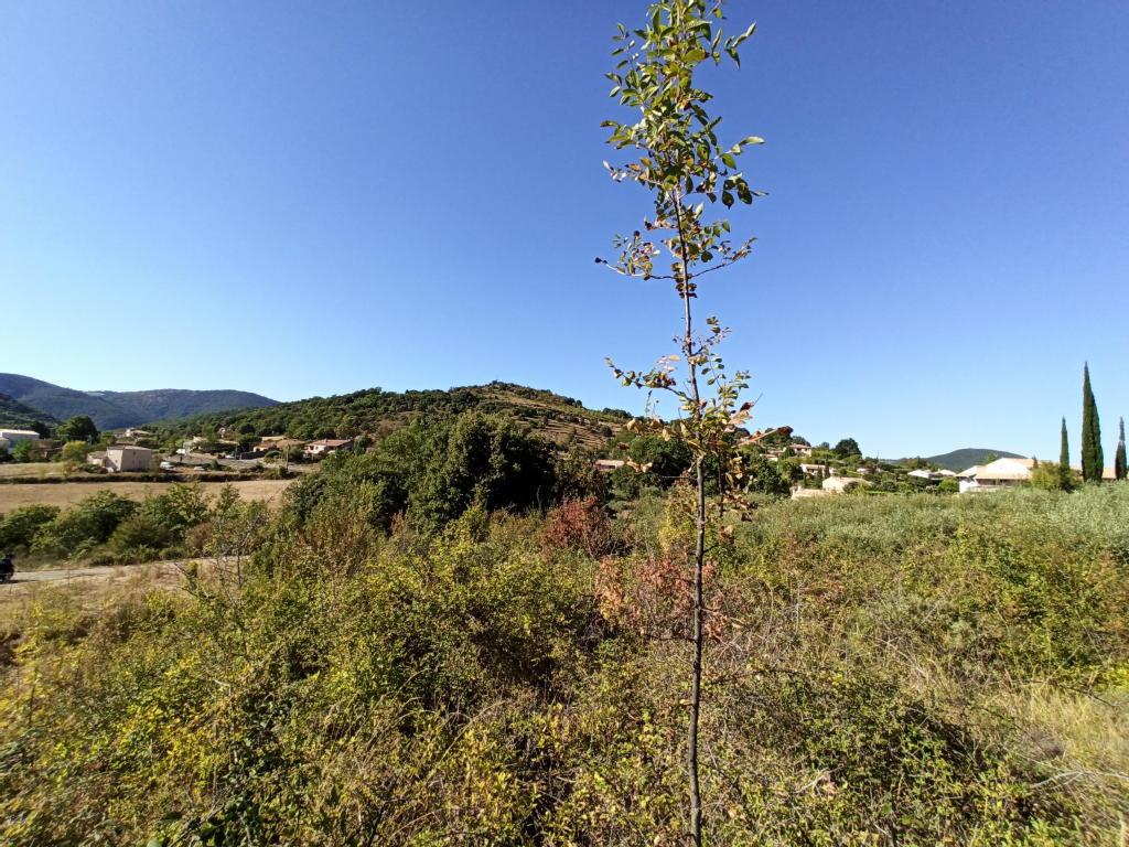Terrains du constructeur GROUPEMENT IMMOBILIER • 1500 m² • LE PRADAL