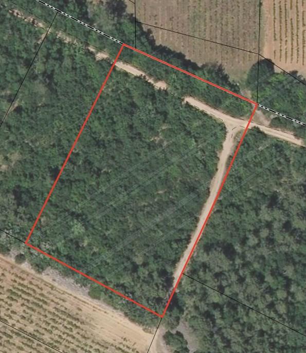Terrains du constructeur AGENCE TERRE D ICI • 9000 m² • LE CANNET DES MAURES