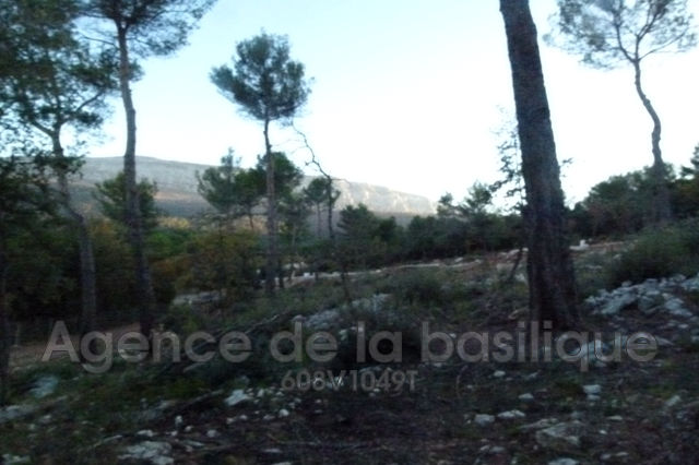 Terrains du constructeur AGENCE DE LA BASILIQUE • 1100 m² • NANS LES PINS