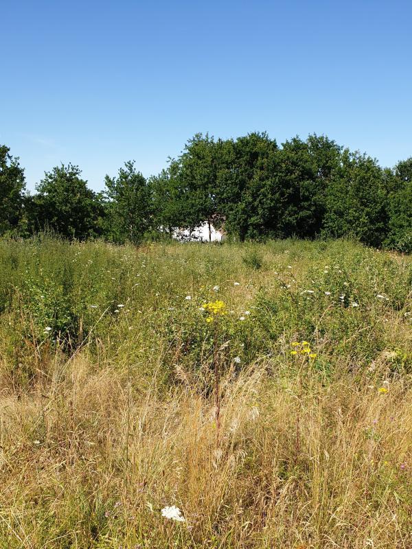 Terrains du constructeur GROUPE DIOGO FERNANDES • 1287 m² • ABONDANT
