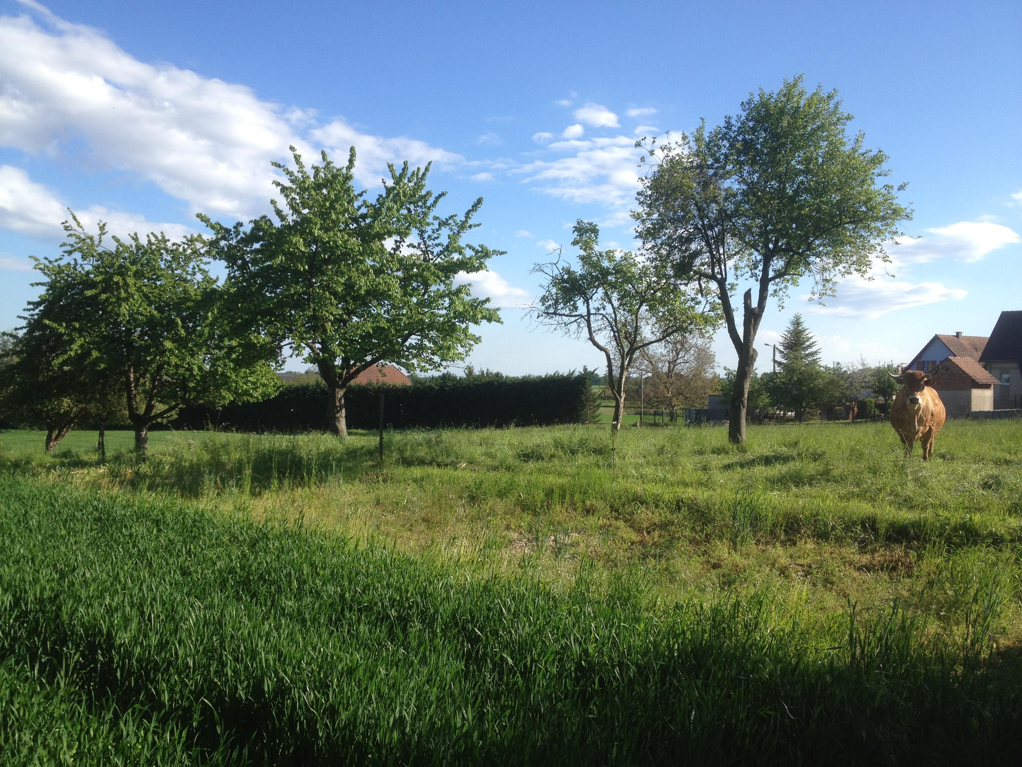 Terrains du constructeur LYCENE • 548 m² • MERXHEIM