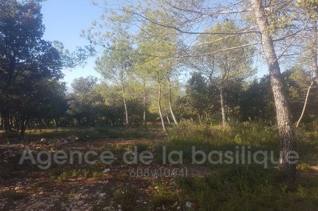 Terrains du constructeur AGENCE DE LA BASILIQUE • 2100 m² • SAINT MAXIMIN LA SAINTE BAUME