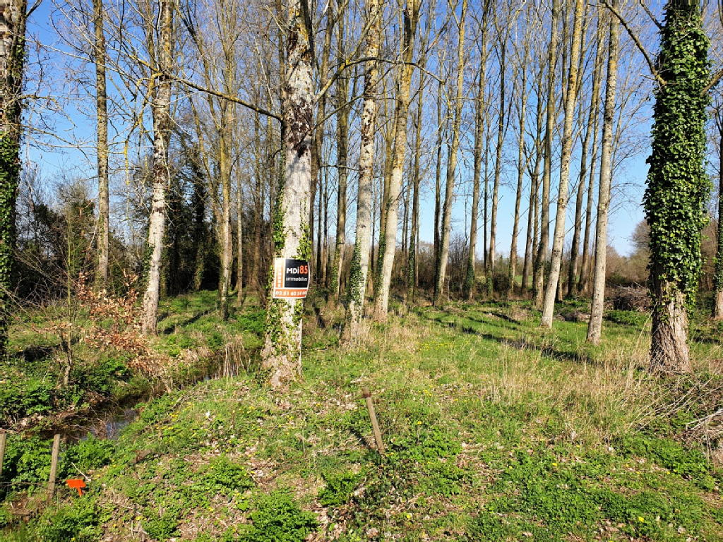 Terrains du constructeur MDI 85 LA MOTHE ACHARD • 6200 m² • AUBIGNY