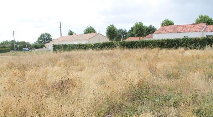 Terrains du constructeur LMP • 730 m² • LA CHATAIGNERAIE