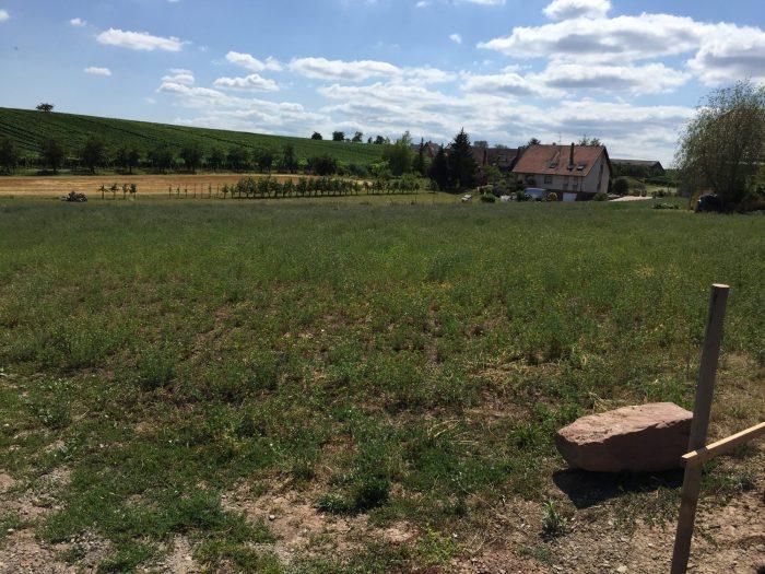 Terrains du constructeur IMMOVIGIE • 918 m² • BALBRONN