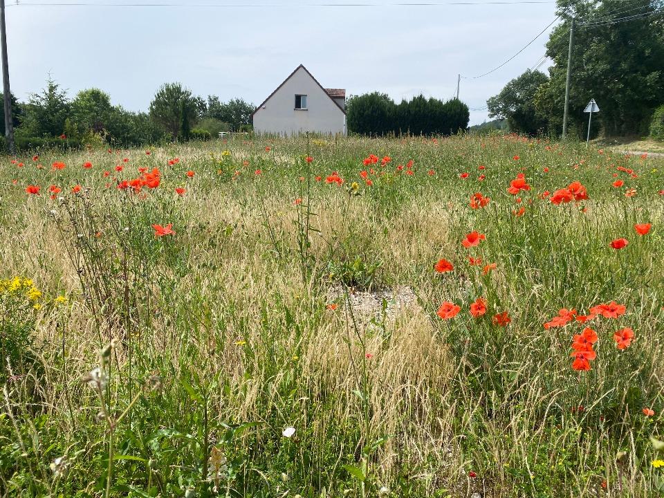 Terrains du constructeur MAISONS FRANCE CONFORT • 1000 m² • CHAGNY