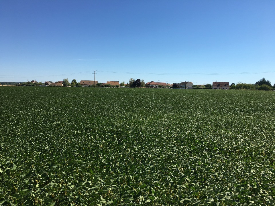 Terrains du constructeur MAISONS FRANCE CONFORT • 750 m² • FARGES LES CHALON