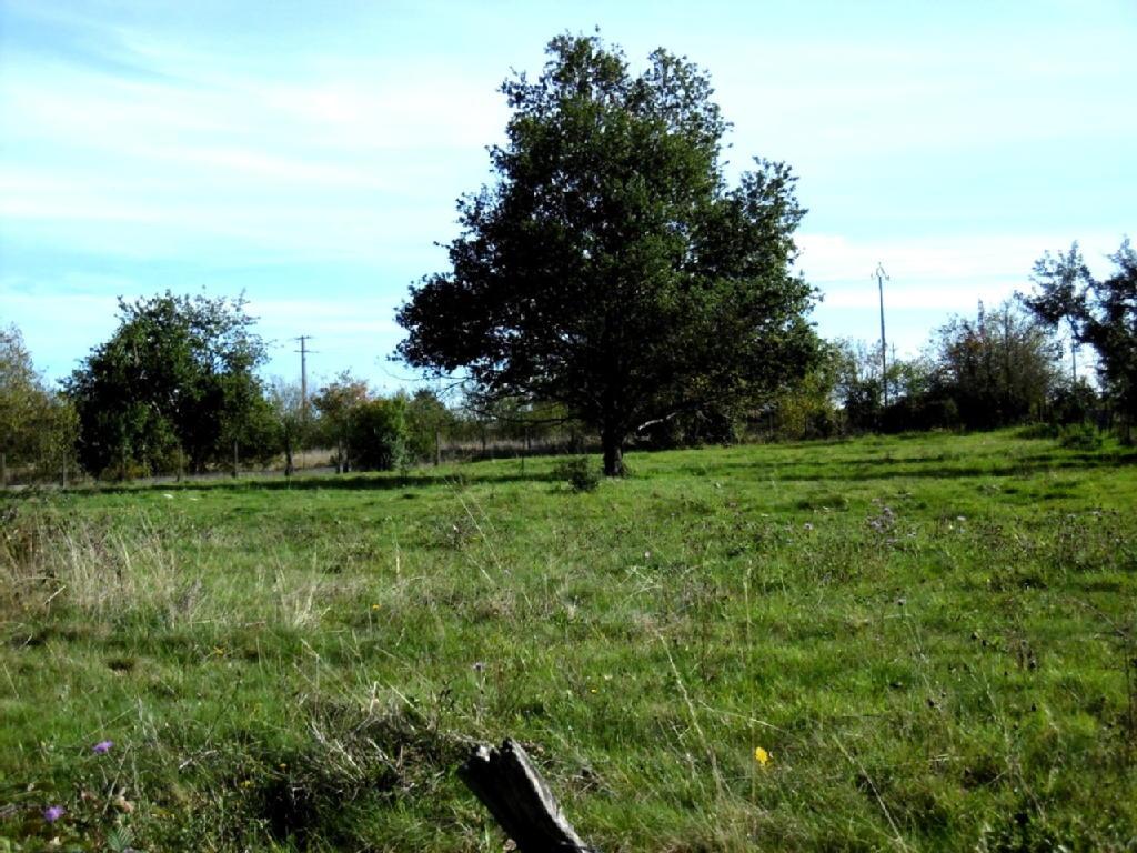Terrains du constructeur BILLOM IMMOBILIER • 0 m² • DOMAIZE