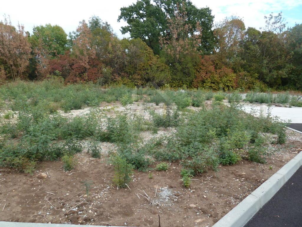 Terrains du constructeur PONT IMMOBILIER • 487 m² • PONT SAINT ESPRIT