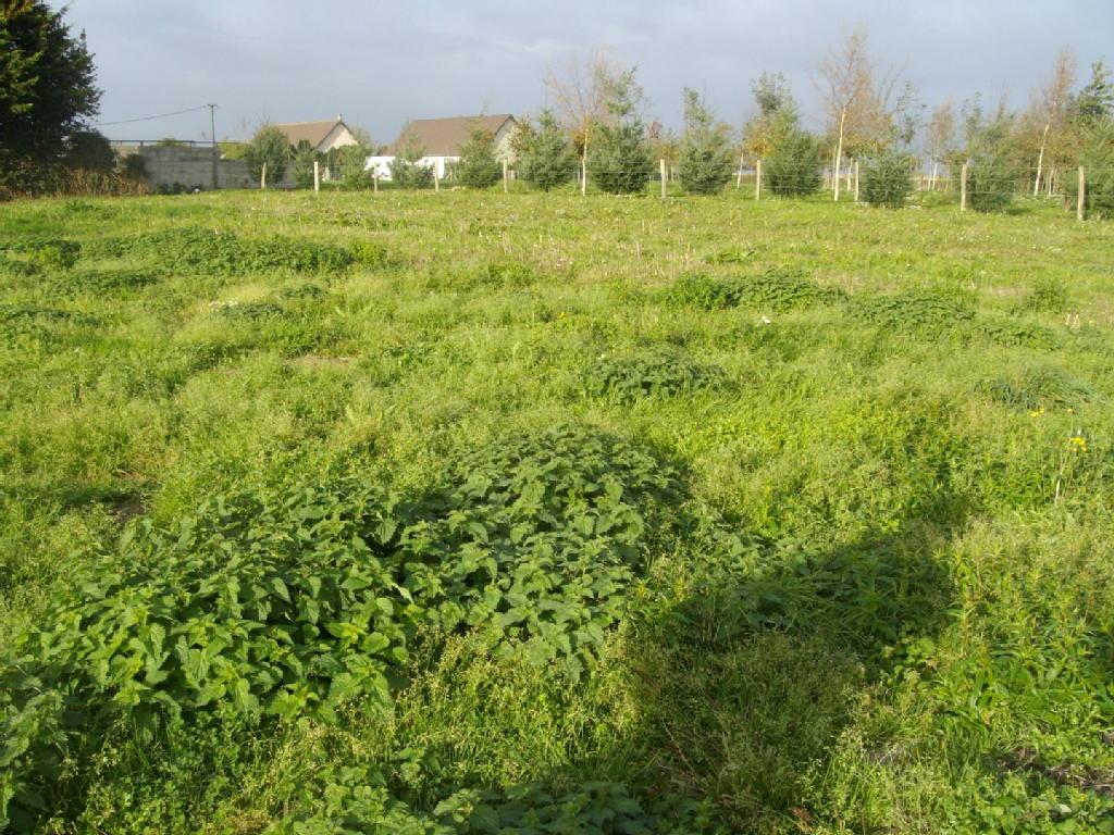 Terrains du constructeur REZOXIMO • 6880 m² • BRETTEVILLE SUR LAIZE