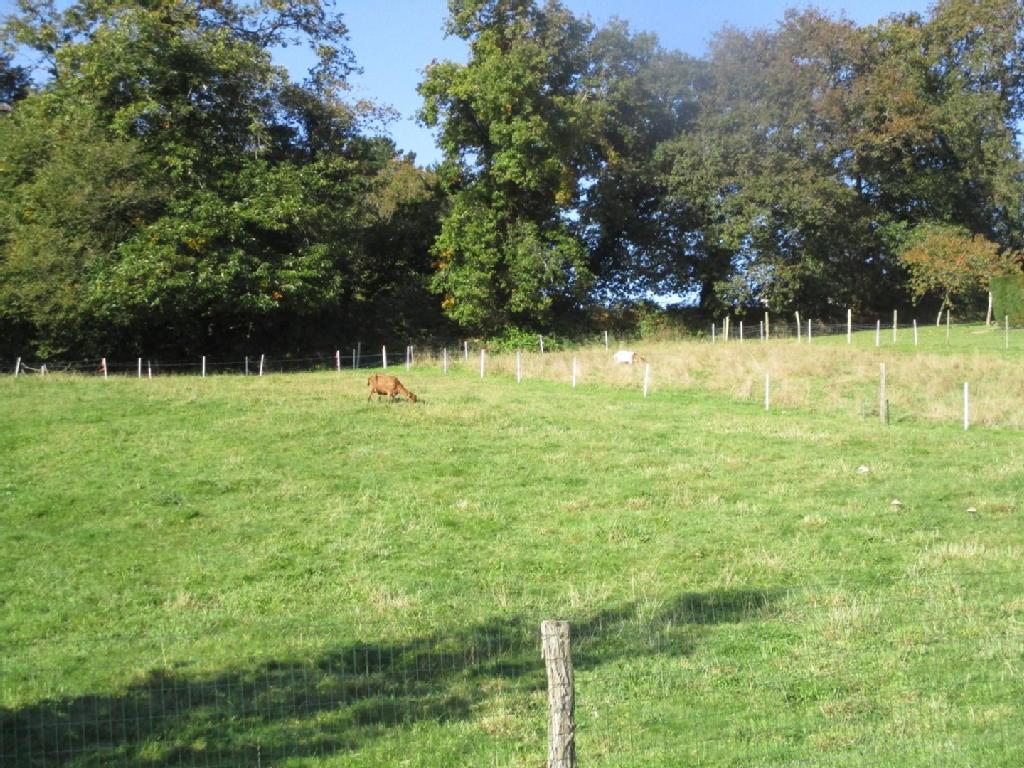 Terrains du constructeur L AGENCE DU FAOUET Groupe Blain habitat • 1800 m² • LE FAOUET