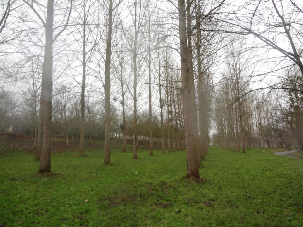 Terrains du constructeur ME CHAVANCE - ESCHBACH - PEMONT - NEVIASKI • 5130 m² • SAINT GERMAIN SUR BRESLE