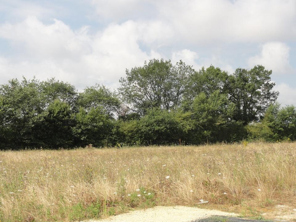 Terrains du constructeur BERMAX CONSTRUCTION • 632 m² • COULOMBIERS