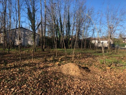 Maison+Terrain à vendre .(83 m²)(TEULAT) avec (MAISONS FRANCE CONFORT)