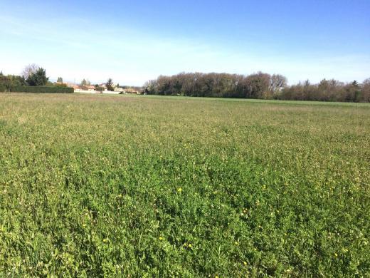 Terrain à vendre .(508 m²)(SAINT DONAT SUR L'HERBASSE) avec (IMMOVIA CONSTRUCTEUR)
