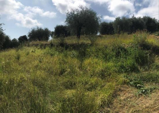 Terrain à vendre .(3900 m²)(FALICON) avec (VILLAS PRISME)